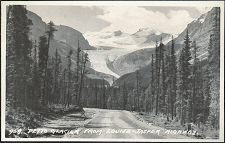 959. Peyto Glacier From Louise-Jasper Highway.