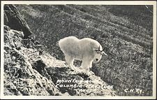Mountain Goat/Columbia Icefields/Canada C.N.RY.